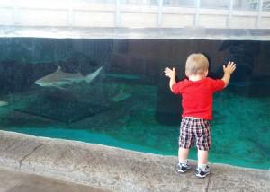Dallas Aquarium 1