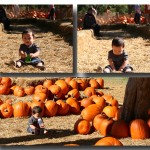 Pumpkin Village at the Dallas Arboretum*