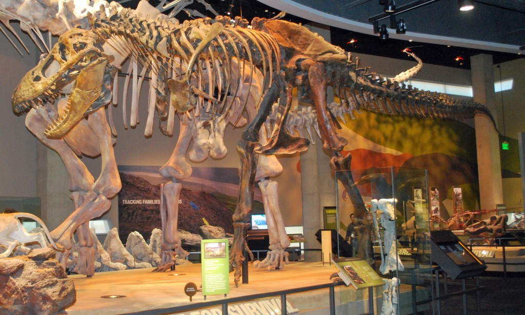 Perot Museum of Nature and Science Level 4