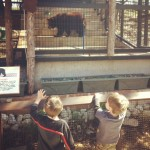 Have You Heard of Frank Buck Zoo?