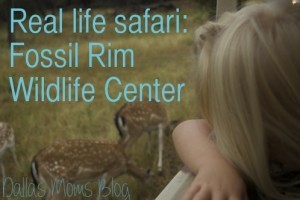 Real life safari at Fossil Rim Wildlife Center