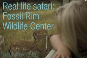 Real life safari at Fossil Rim Wildlife Center