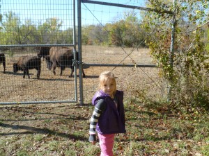 feeding bison