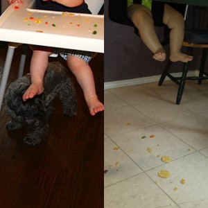 Dallas Moms Blog Toddler Must Have Dogs