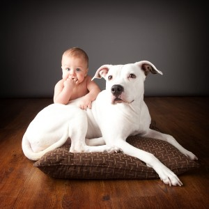 baby and Pit Bull