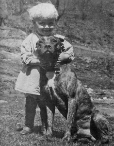 pit bull and child, nanny dog
