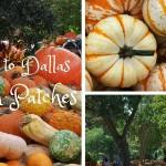 Pumpkins, Hayrides, & Corn Mazes: A Guide to Dallas Metroplex Pumpkin Patches