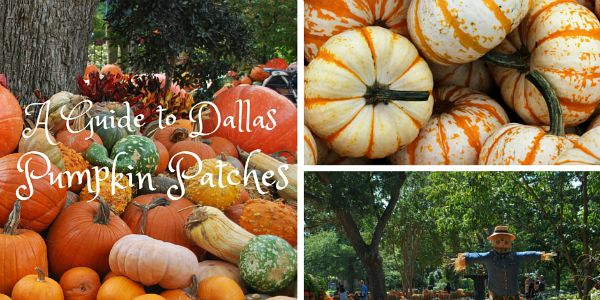 A Guide to Dallas Pumpkin Patches 2015 DallasMomsBlog-Featured Image