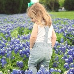 Bluebonnet Fields in Dallas – Get the Best Photos!
