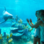 Get Hands-On at SeaWorld San Antonio's Discovery Point