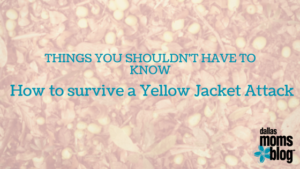 how to survive yellow jacket attack