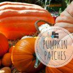 The 2016 Dallas Pumpkin Patch Guide