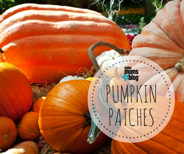 featured-image-pumpkin-patches-dallas-moms-blog
