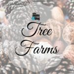 A Guide to Christmas Tree Farms In & Around Dallas {2017}
