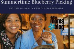 Summertime Blueberry Picking