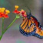 Texas Discovery Gardens: Pollinator Party!