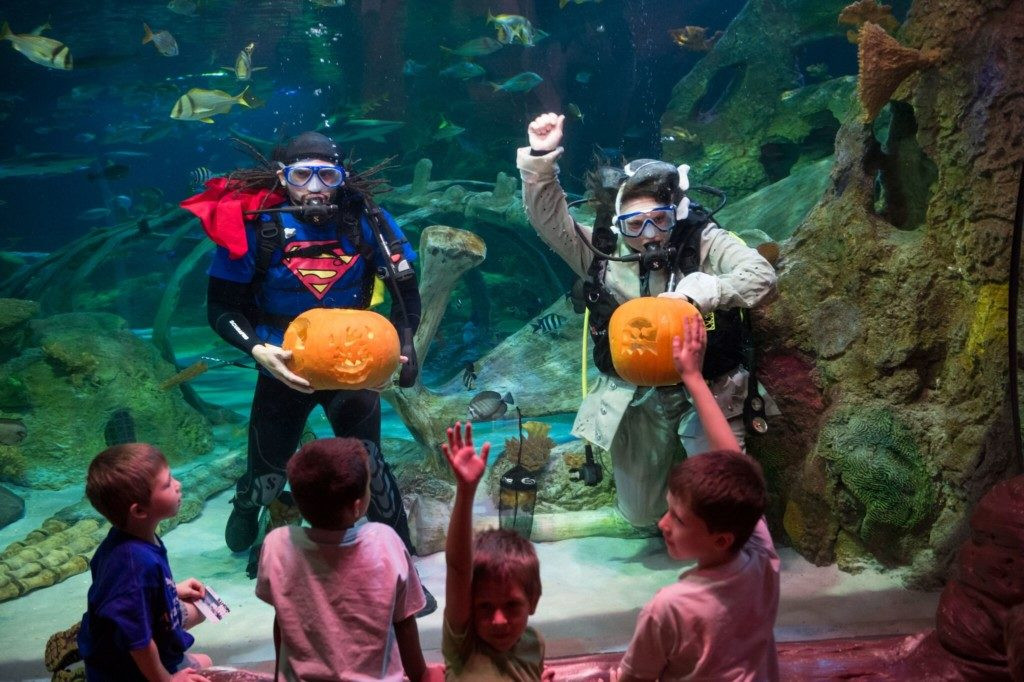 Unique Ways to Celebrate Halloween in Dallas