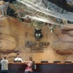 3 Reasons to Spend the Howl-idays at Great Wolf Lodge