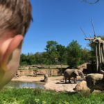 {10 Tips} for a Fun Visit to the Dallas Zoo this Spring