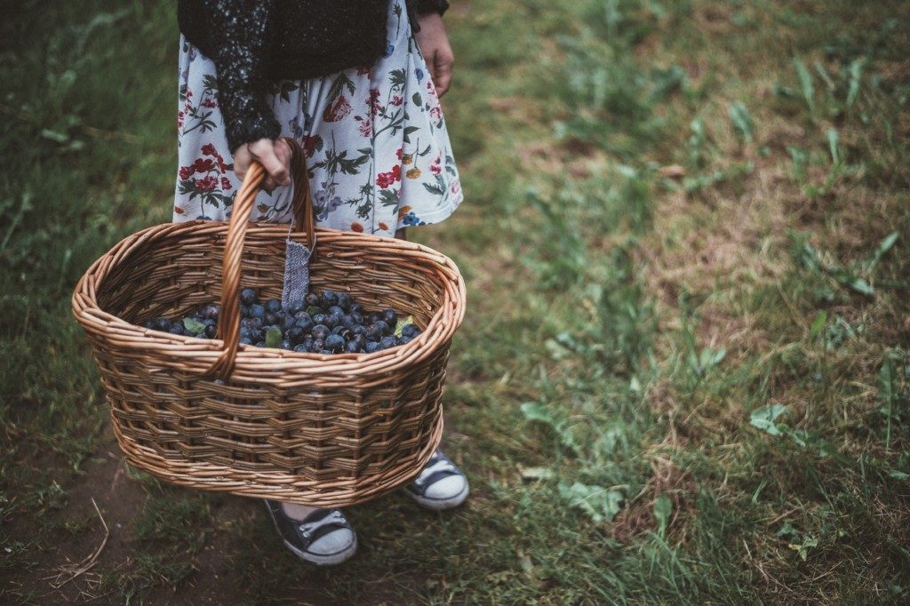 Where to Go :: A Guide to Berry Picking and Local Farms