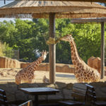 Visit the {Caldwell Zoo} and the Newly Renovated African Overlook Exhibit