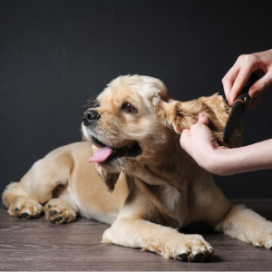 outsourcing mom dallas pet grooming service